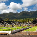 Hawaii's Kunia Country Farms Receives Envision Gold