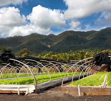 Hawaii's Kunia Country Farms provides sustainable locally grown foods to surrounding communities