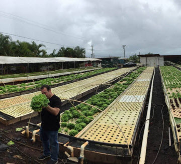 The Hawaii Section Younger Member Forum recently took a tour of Kunia Country Farms. Courtesy Hawaii YMF