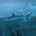 ASCE Innovation Contest to Give Winners a 'Shark' Bite