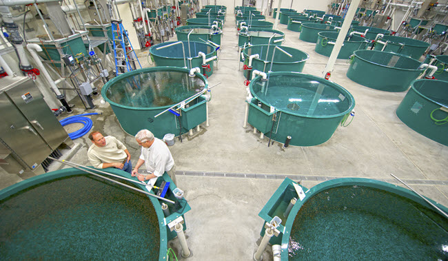 William Jack Hernandez Fish Hatchery 3 (web image)
